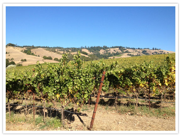lacasserolechaude-Navarro-winery-vignoble-6